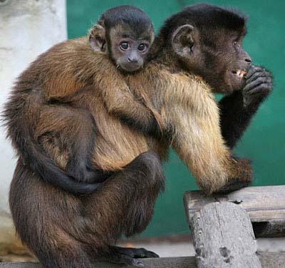 monkey-on-my-back